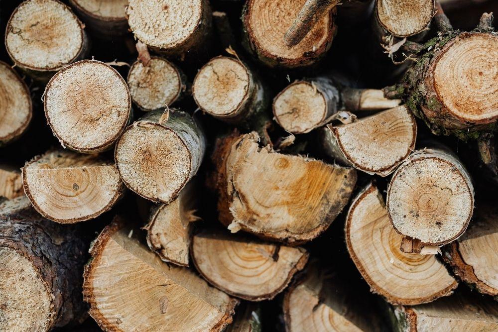 Tipos de madera: ¿cuáles son las más comunes?